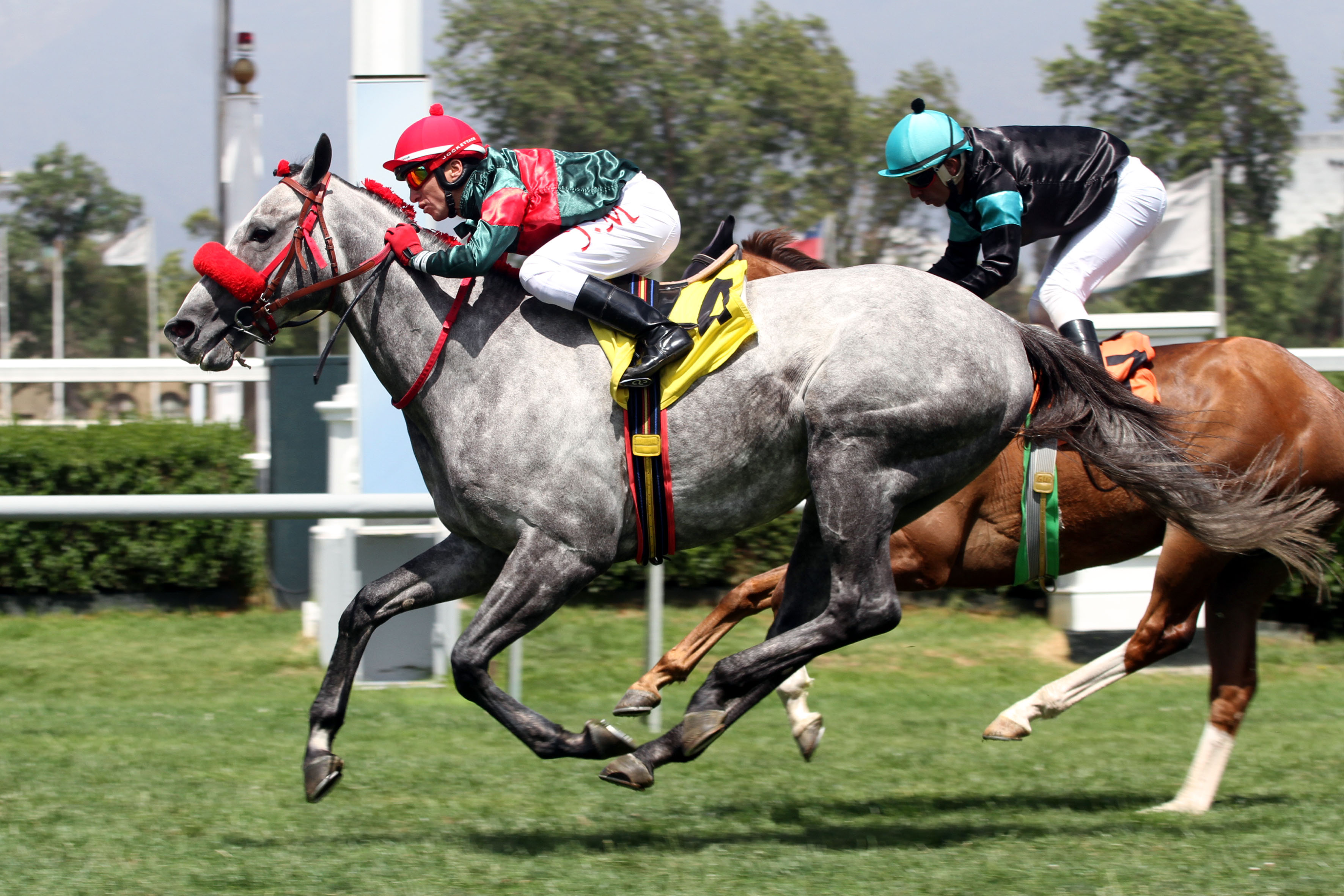 Gran Nevado (Rock of Gibraltar) se adjudica Handicap (1800m-Pasto-CHS). - Staff ElTurf.com